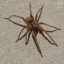Уничтожение пауков в Хабаровске